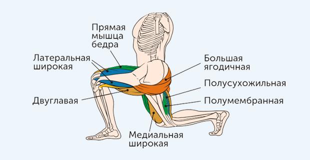 болгарские выпады - какие мышцы работают