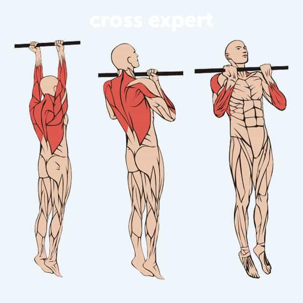 Подтягивания обратным хватом - какие мышцы работают