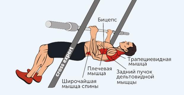 обратные подтягивания - какие мышцы работают