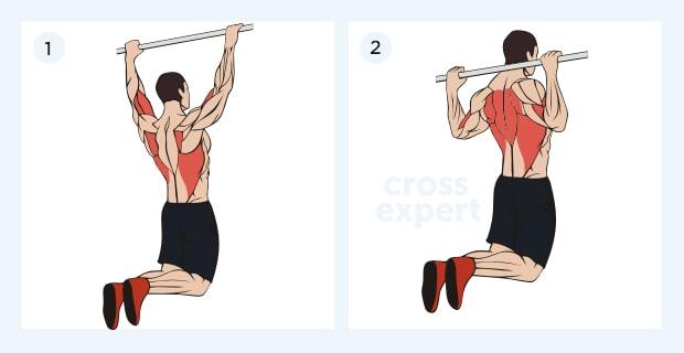 подтягивание за голову - какие мышцы работают