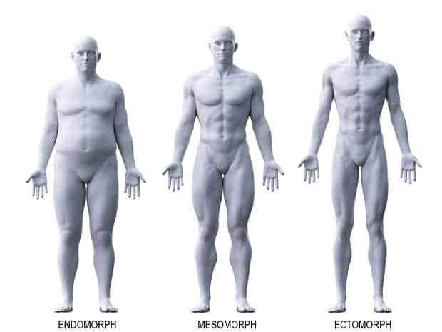 Эндоморф, мезоморф и эктоморф