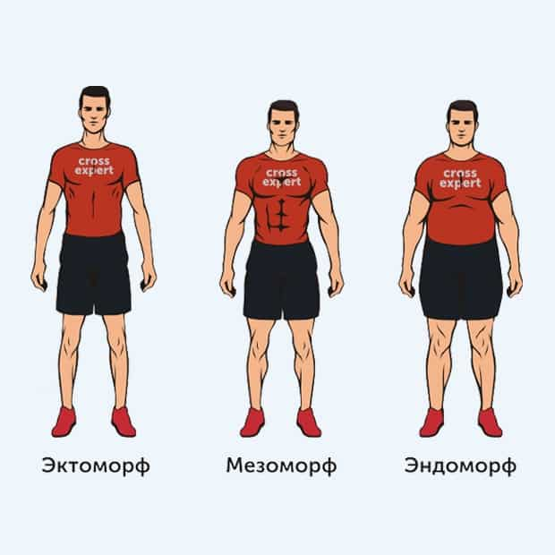 типы телосложения у мужчин