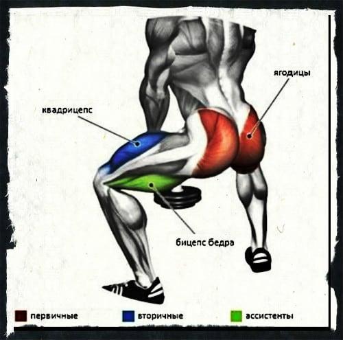 Какие мышцы работают при приседаниях плие с гантелей