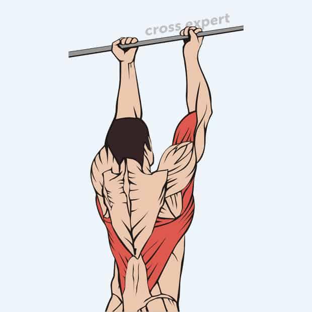 Подтягивания узким хватом - мышцы