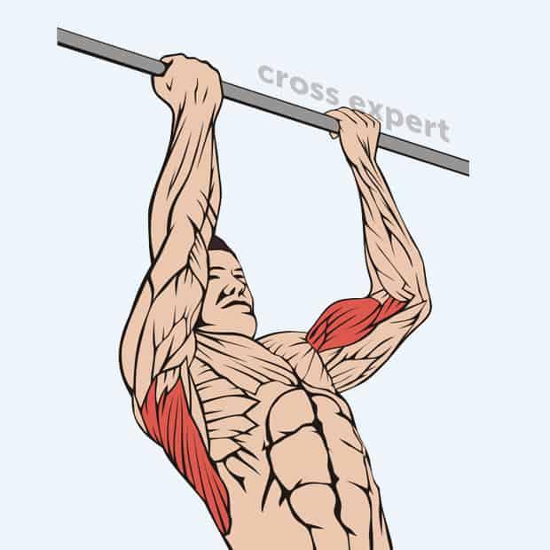 Подтягивания узким хватом - какие мышцы работают