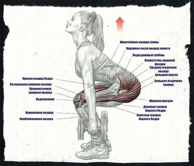 Приседаня с гантелями - какие мышцы работают