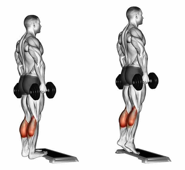 Мышцы, работающие при подъемах на носки с гантелями
