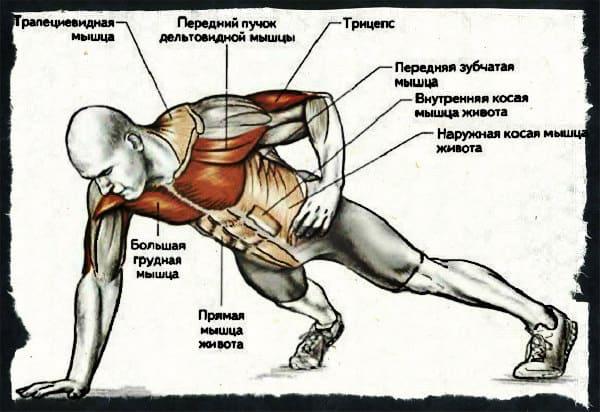 Какие мышцы работают при отжиманиях на одной руке