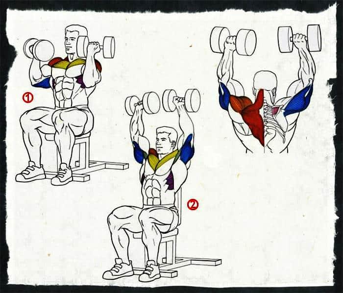 какие мышцы работают при жиме арнольда