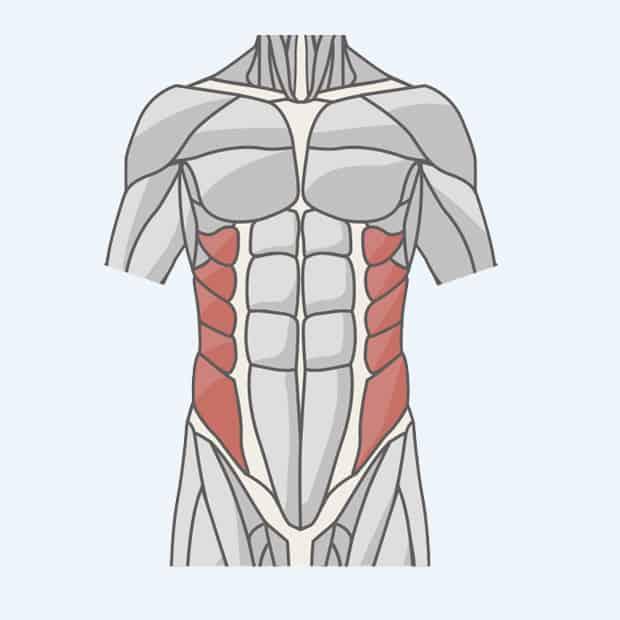 косые мышцы пресса