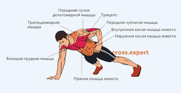 отжимания на 1 руке - какие мышцы работают