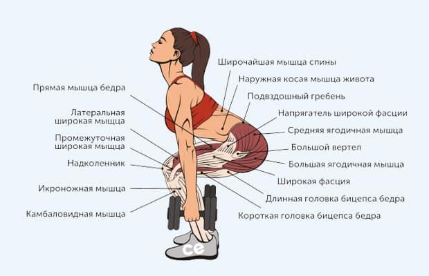 приседания с гантелями - мышцы