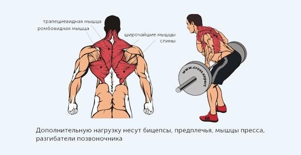 Мышцы, работающие в тяге штанги к поясу