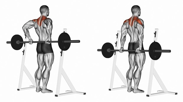 Мышцы, работающие при тяге Ли Хейни