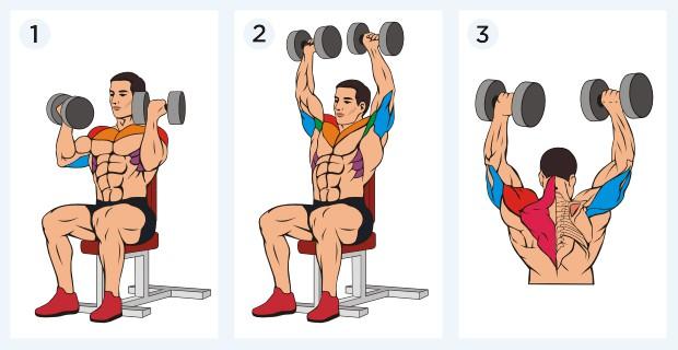 жим арнольда - какие мышцы работают