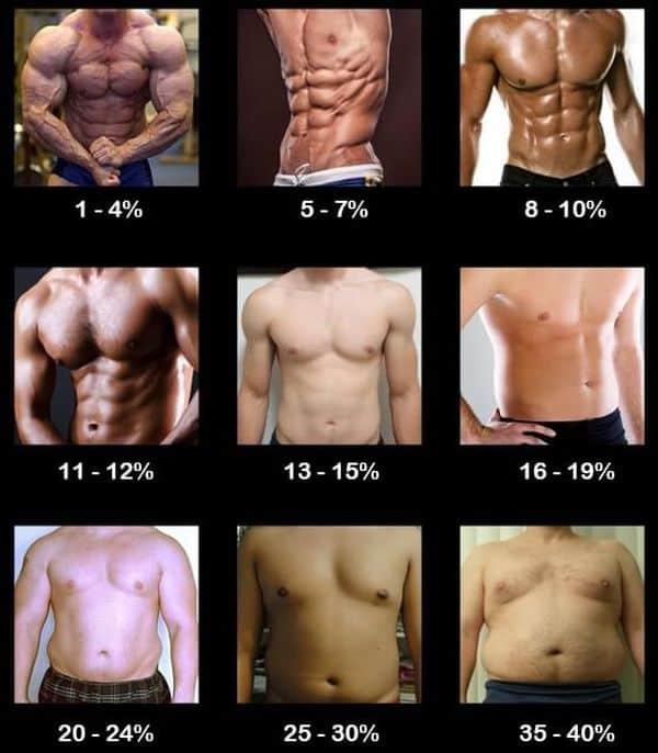 Процент жировой ткани в организме мужчины