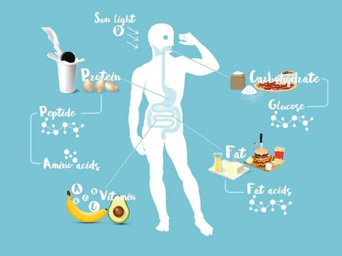 Влияние аминокислот на организм
