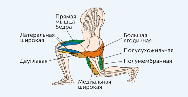 выпады - какие мышцы работают