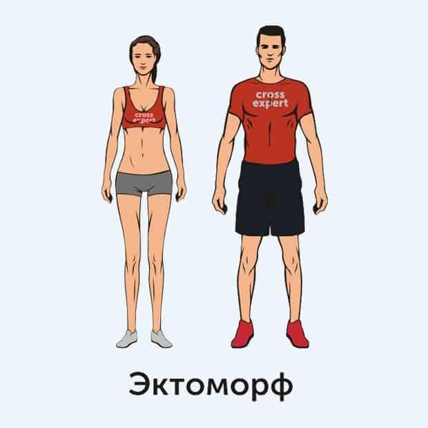 эктоморф- тип телосложения
