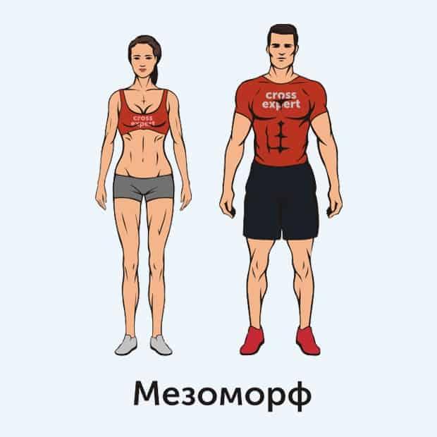 мезоморф - тип телосложения