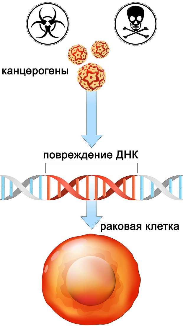 влияние канцерогенов