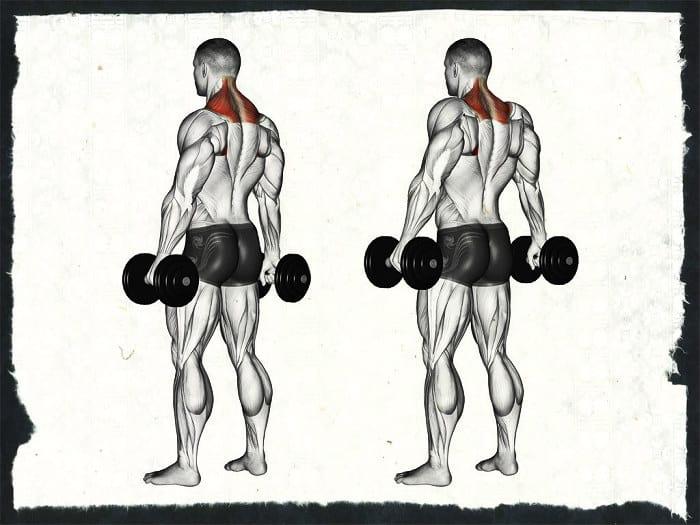 Шраги с гантелями для трапецевидных мышц