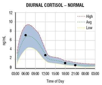 Уровень кортизола в организме человека