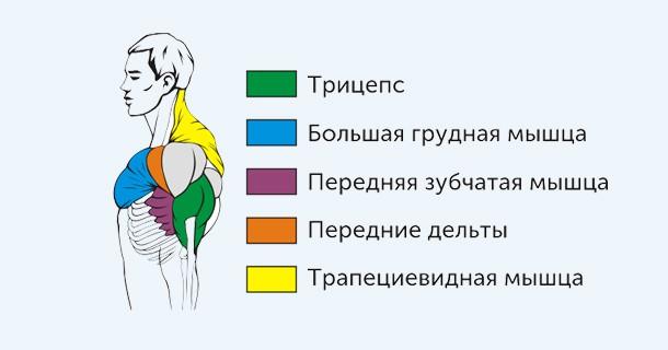 жим штанги узким хватом лежа (мышцы)