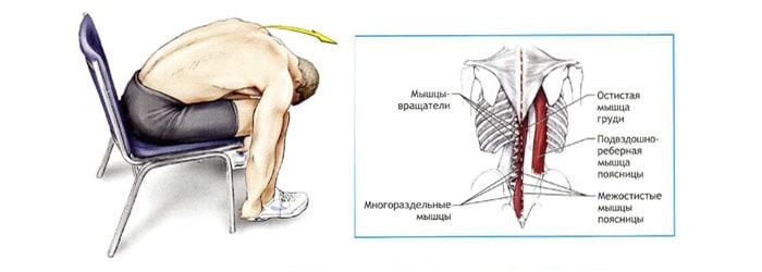 Растяжка разгибателей спины