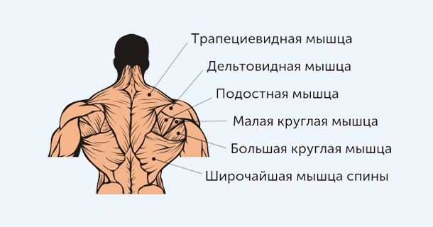 мышцы плечевого сустава