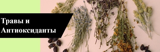 травы и антиоксиданты