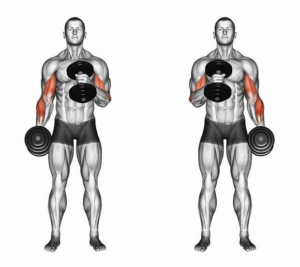 подъем гантели на бицепс молотком (мышцы)