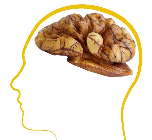 польза грецкого ореха для мозга