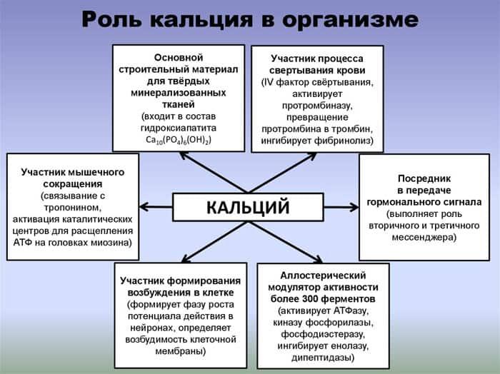 Роль кальция