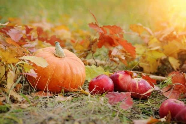 полезный овощ тыква и яблоки в осенней листве
