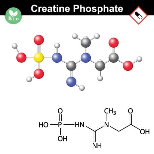 Креатин фосфат