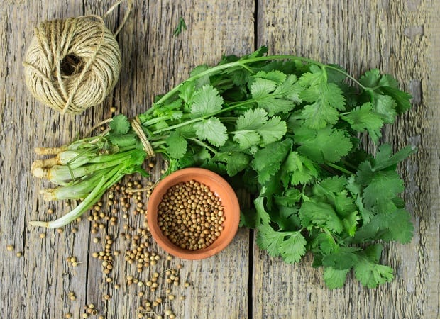 пучок свежей кинзы и семена кориандра