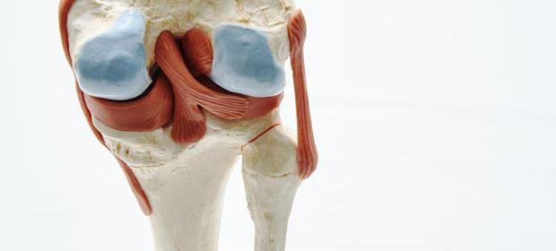 Модель колена