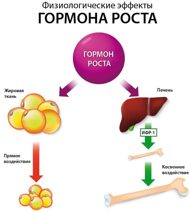 Как действует соматропин