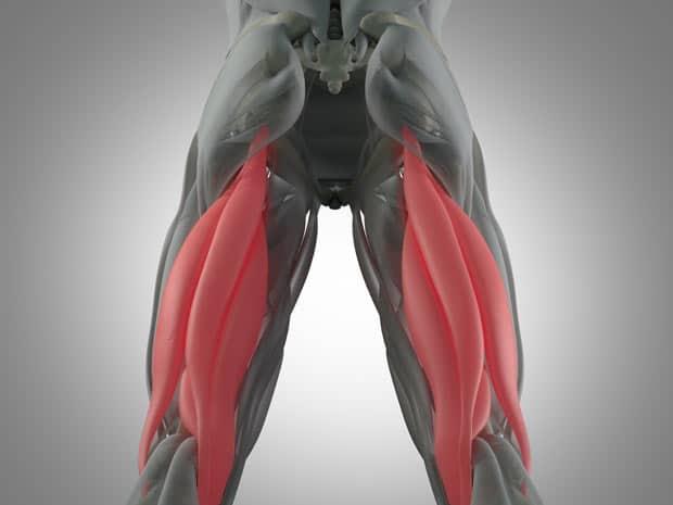 Дорсальная поверхность