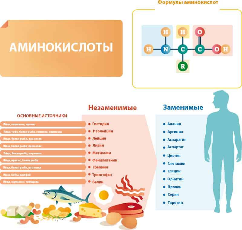 Аминокислоты и их источники