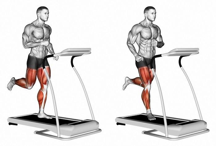 мышцы, работающие на беговой дорожке
