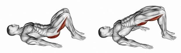 работающие мышцы в ягодичном мостике