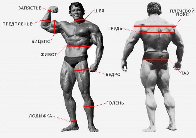 расположение замеров тела
